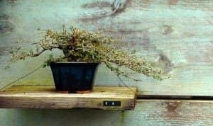 Bonsai Zen. 5 Dicas para produtividade ao trabalhar em casa e não cair na rotina.