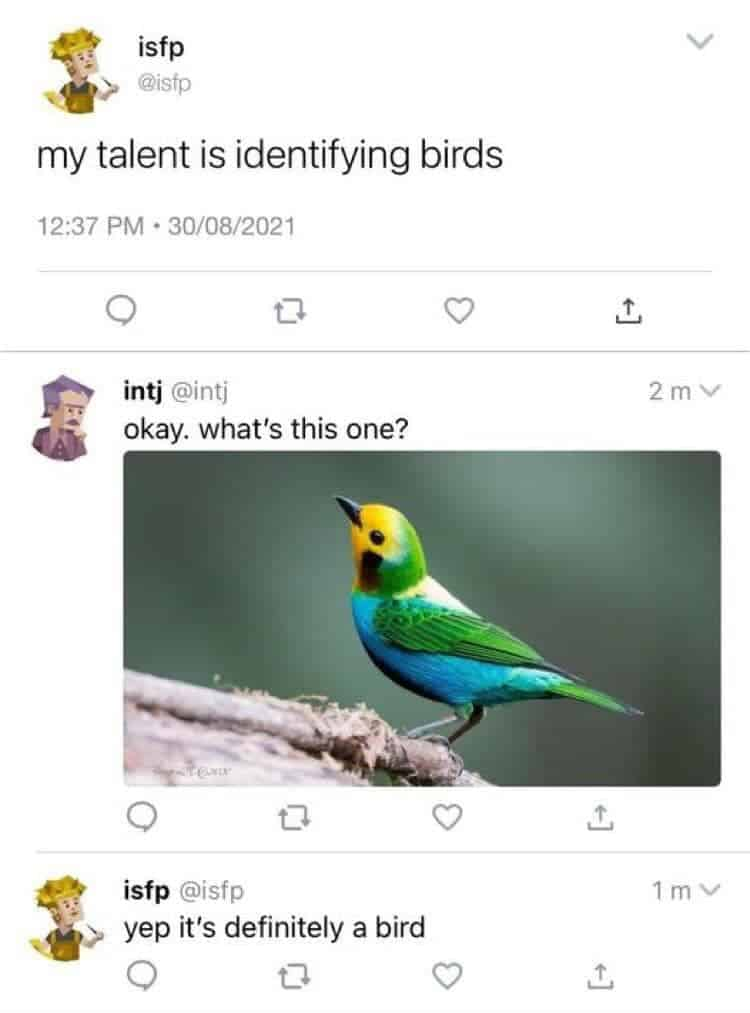 3 tweets by two users, each one with a humorous  poligonal, cartoonish avatar. First tweet reads: my talent is identifying birds. Second tweet reads: okay. what's this one? followed by a picture of a birds with feathers of several colors: yellow in the front part of the head, green in the back of the head, wings and tails, blue in most of the belly with some black on the bottom belly, white in the back. third tweet reads: yep it's definitely a bird.
